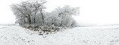 Spherical Panorama from German Winter