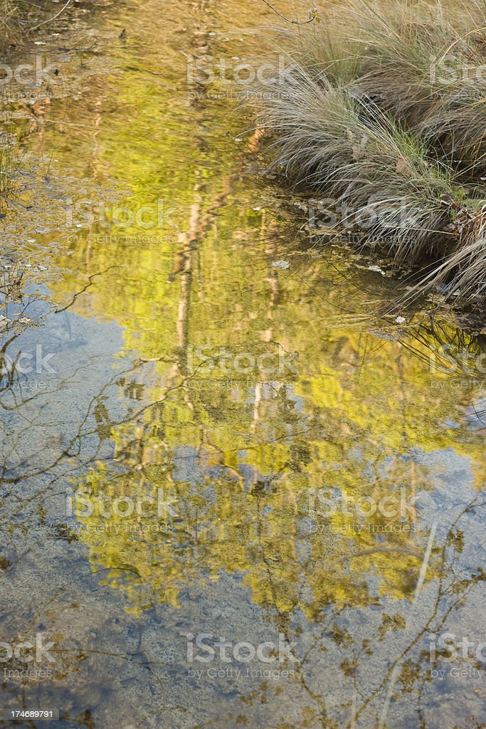 Spicewood Springs Brook reflections stock photo
