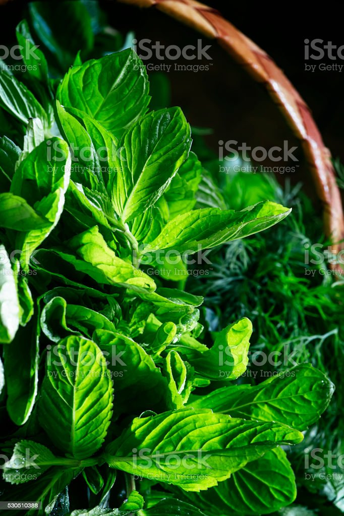 Spicy herbs: green basil, mint, coriander, dill, cilantro stock photo