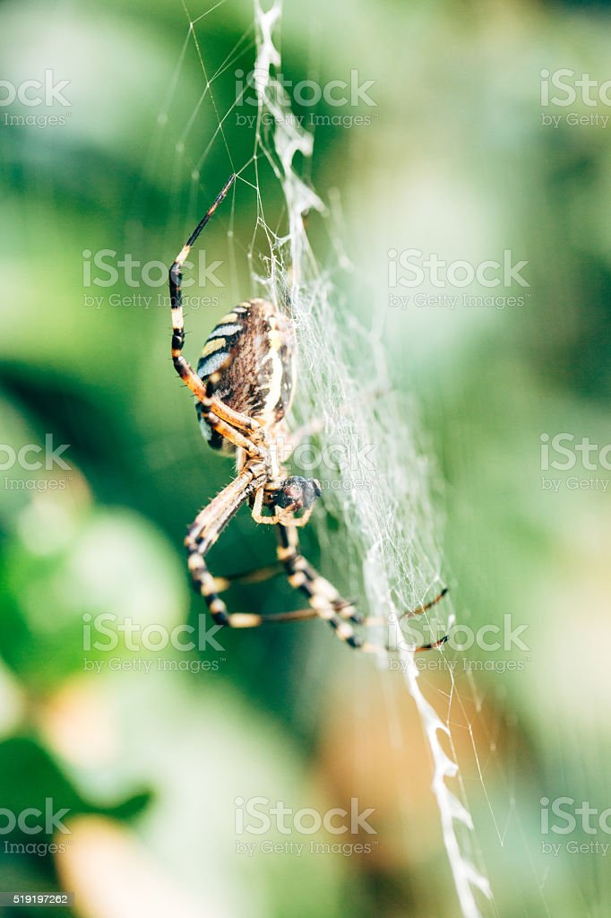 Spide on the net stock photo