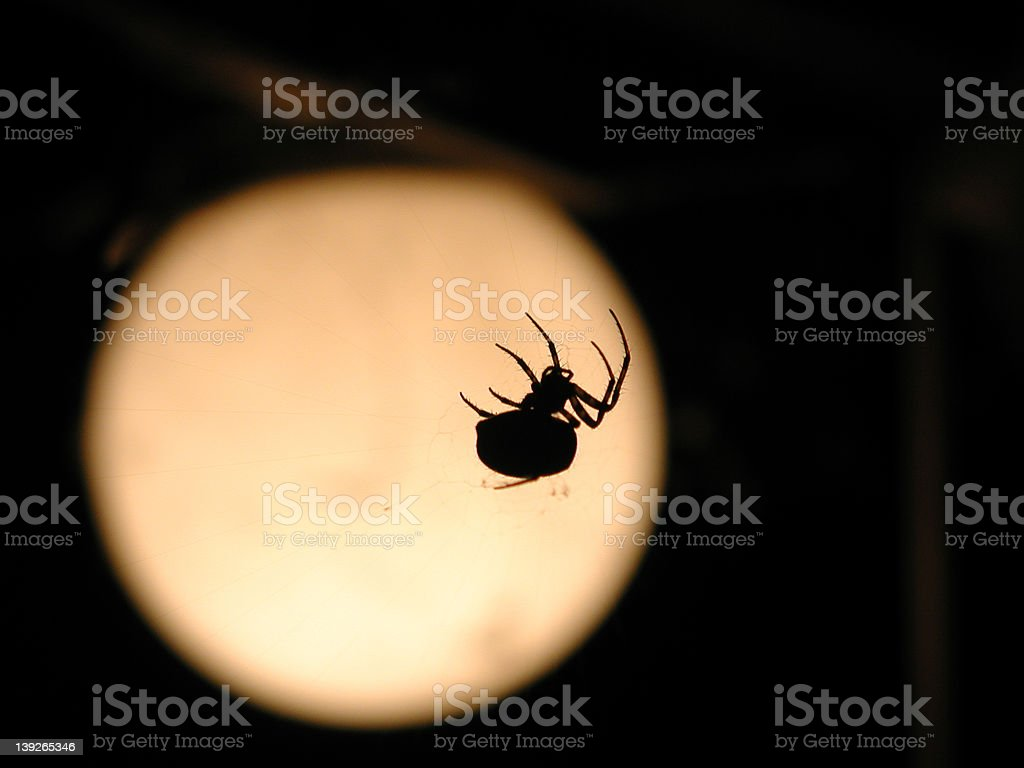 Spider and Moon royalty-free stock photo