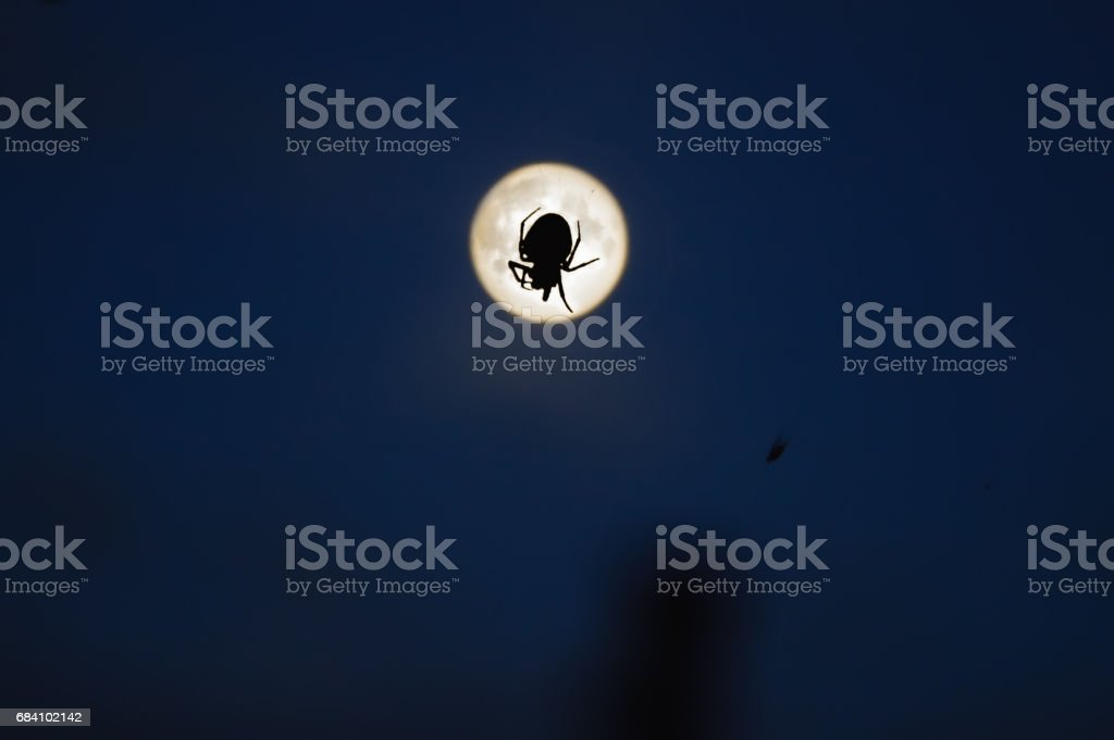 spider and moon stock photo