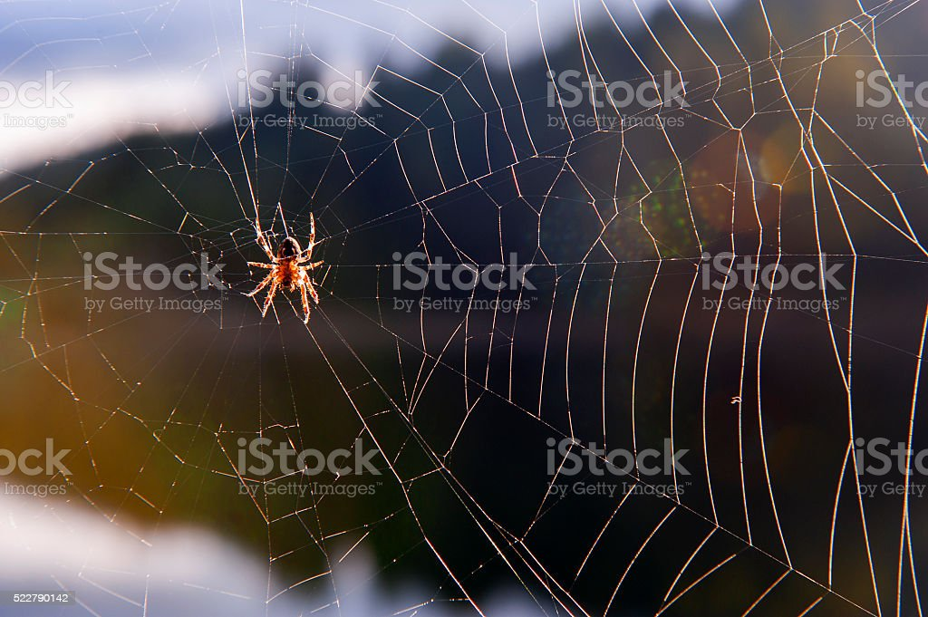 Spider and spiderweb stock photo
