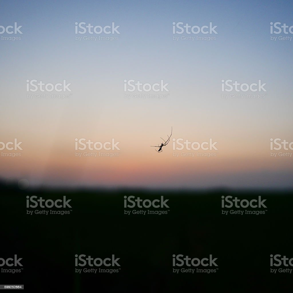 spider and sunset stock photo