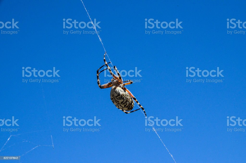 Spider and Web stock photo