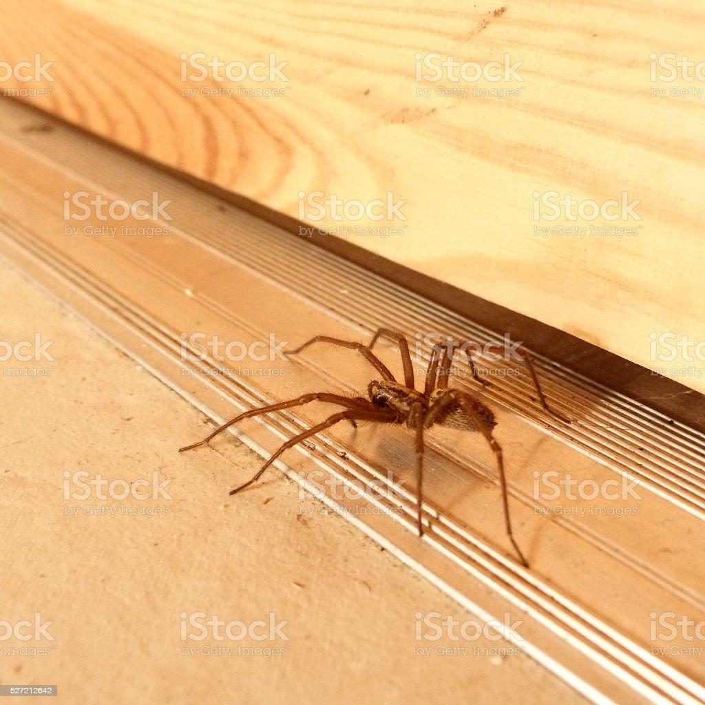 Spider at the door stock photo