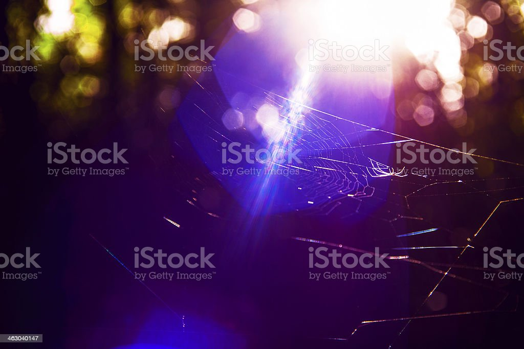 Spider bokeh stock photo