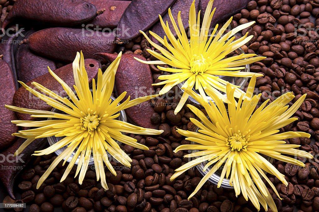 Spider Chrysanthemum stock photo