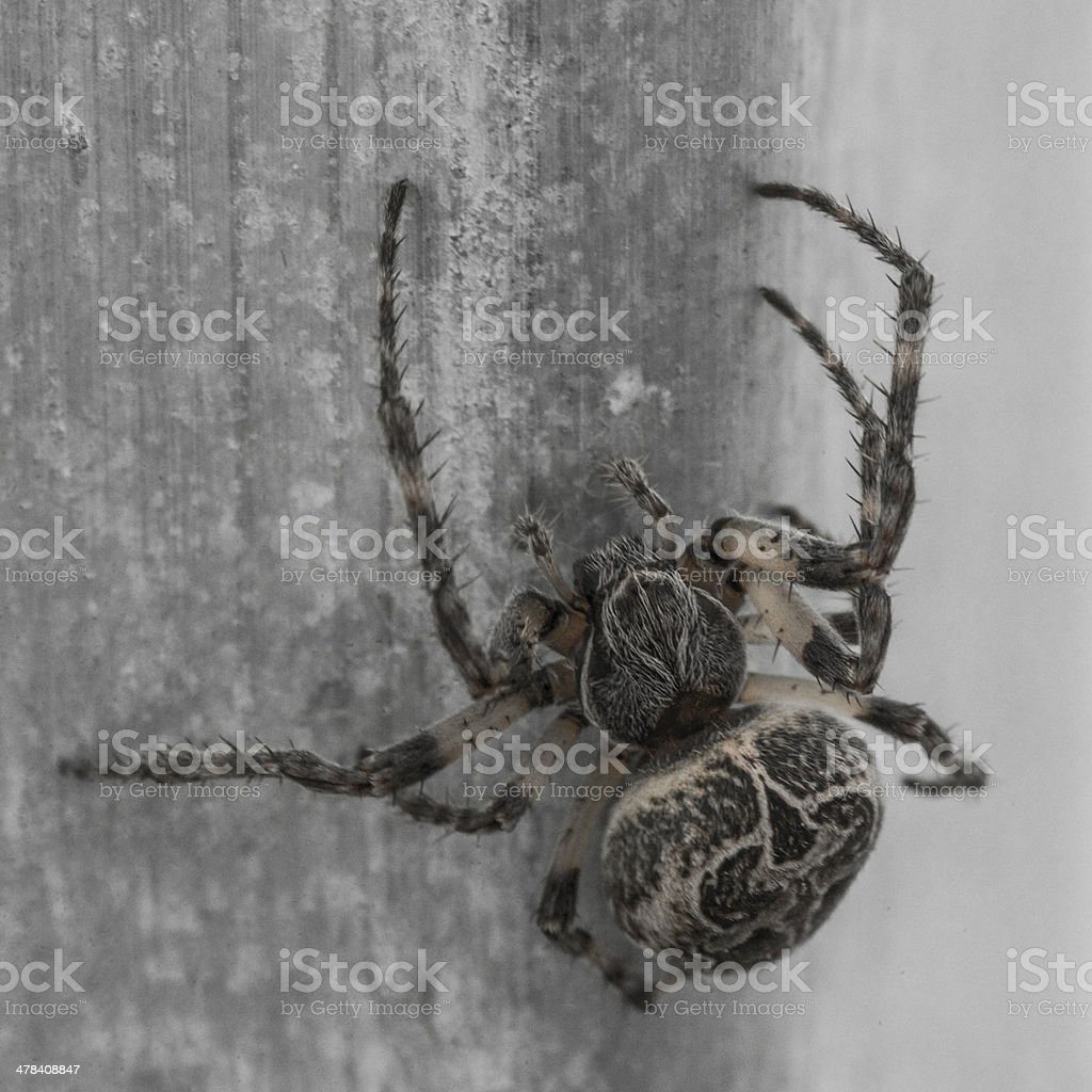spider close up stock photo