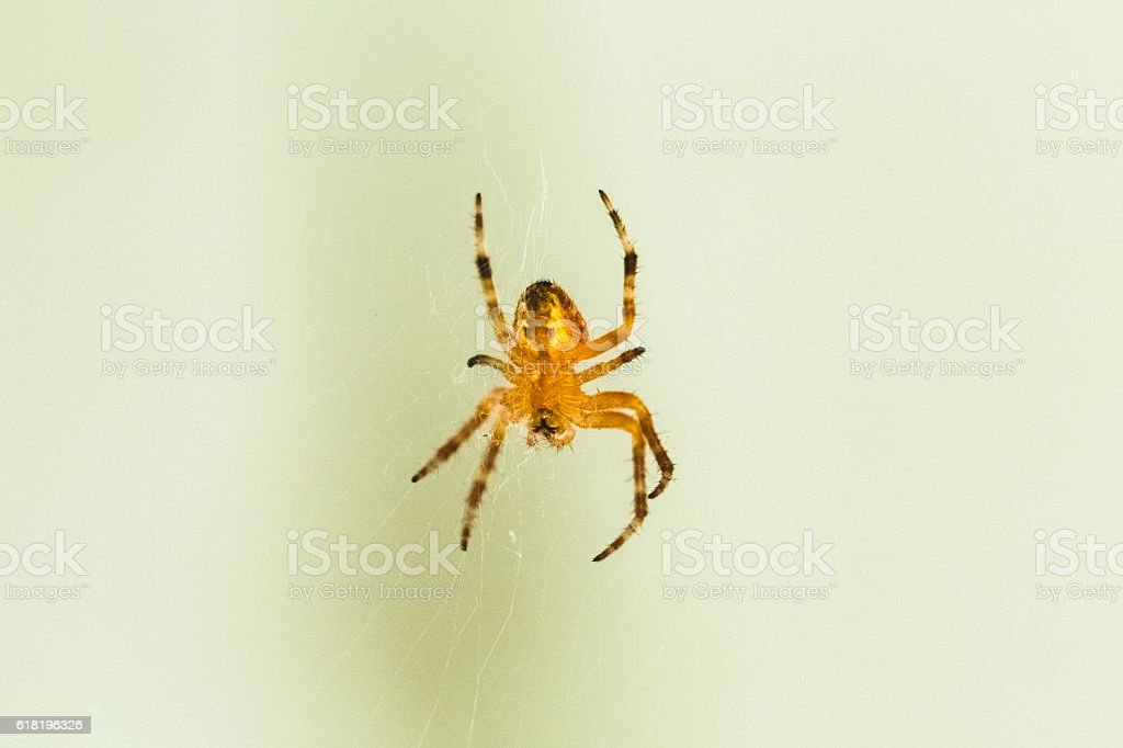 Spider Closeup stock photo