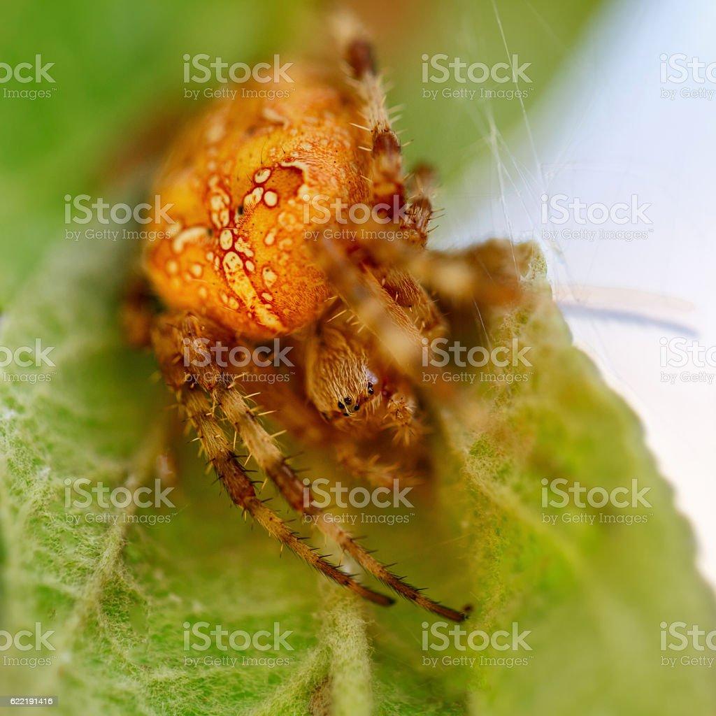 Spider closeup. stock photo