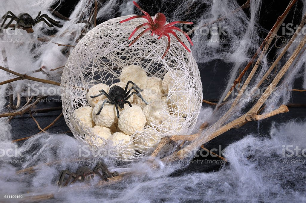 spider eggs in a cocoon stock photo