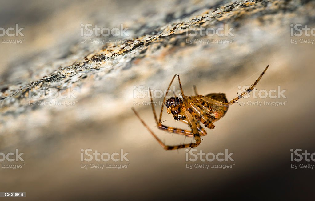 Spider hanging from roof in a cave stock photo