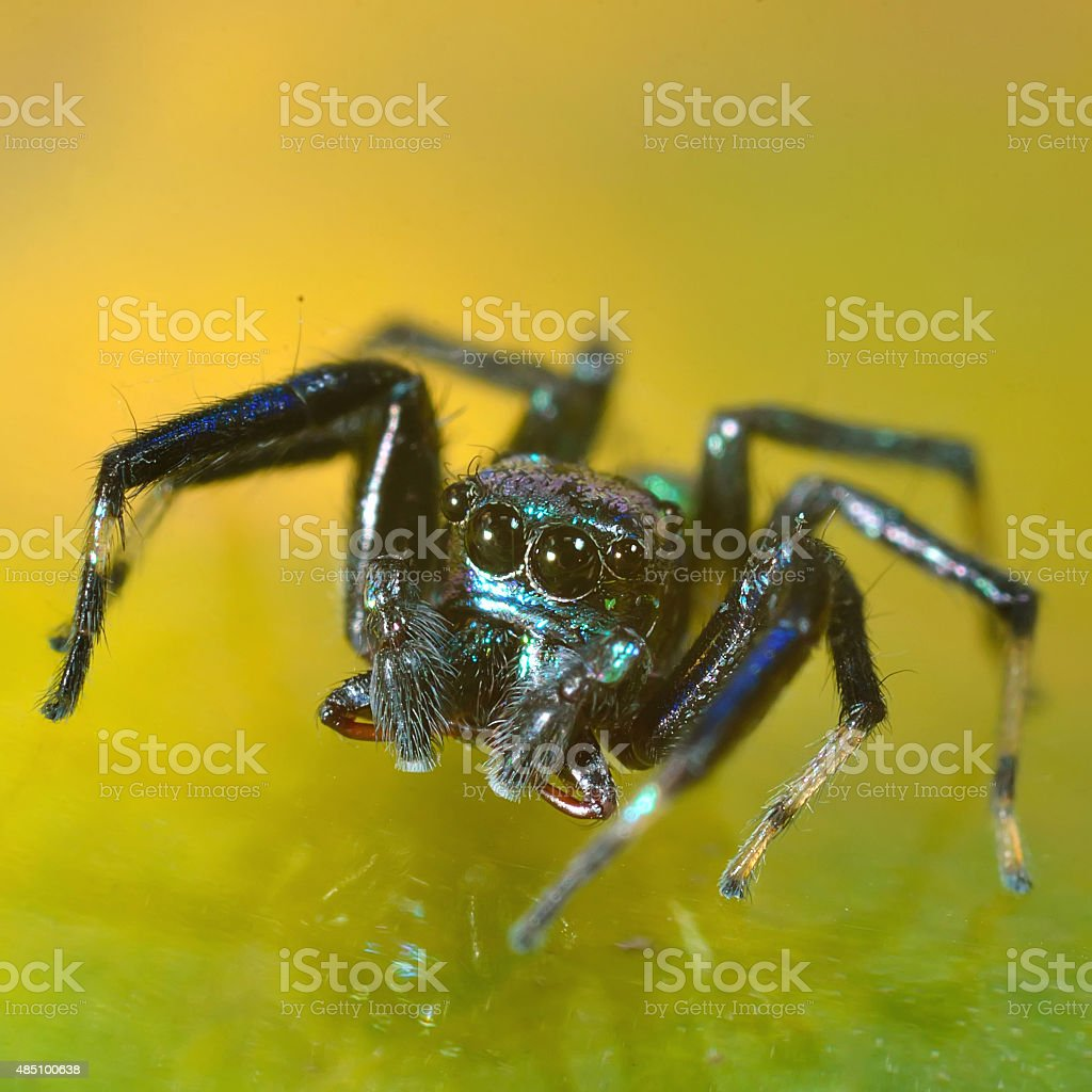 spider in nature stock photo