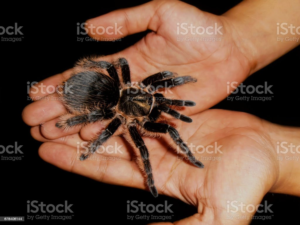 Spider in the Hand stock photo