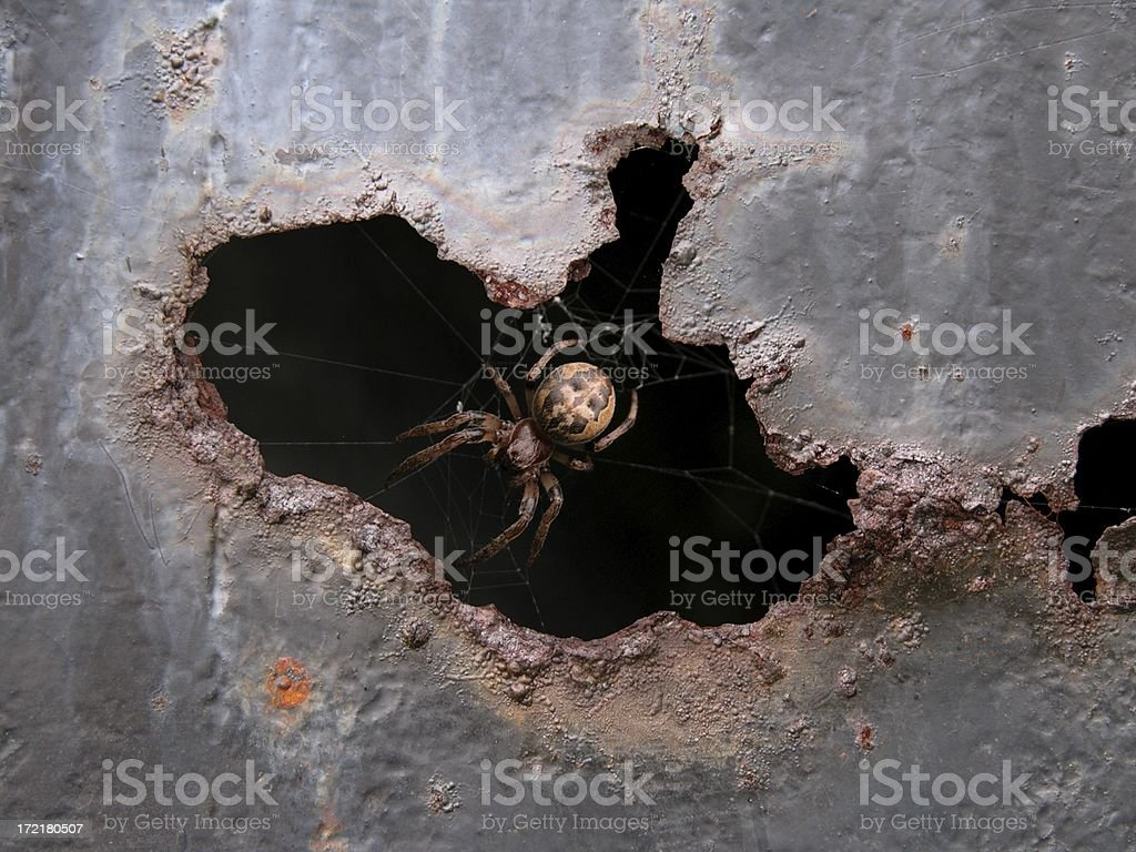 Spider in the hole royalty-free stock photo