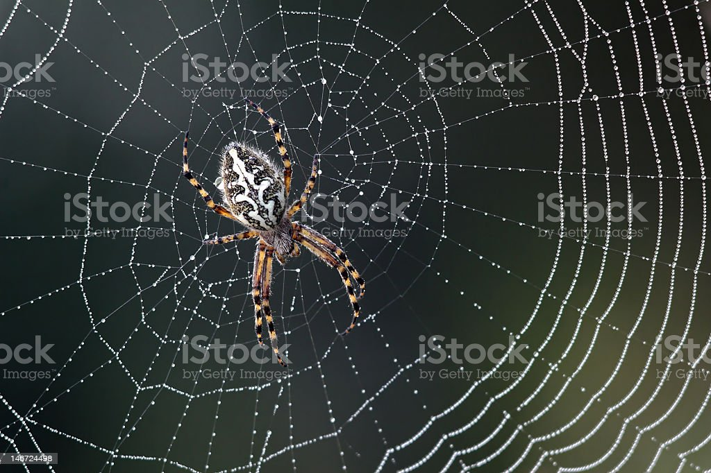 Spider in the middle of a silver web stock photo