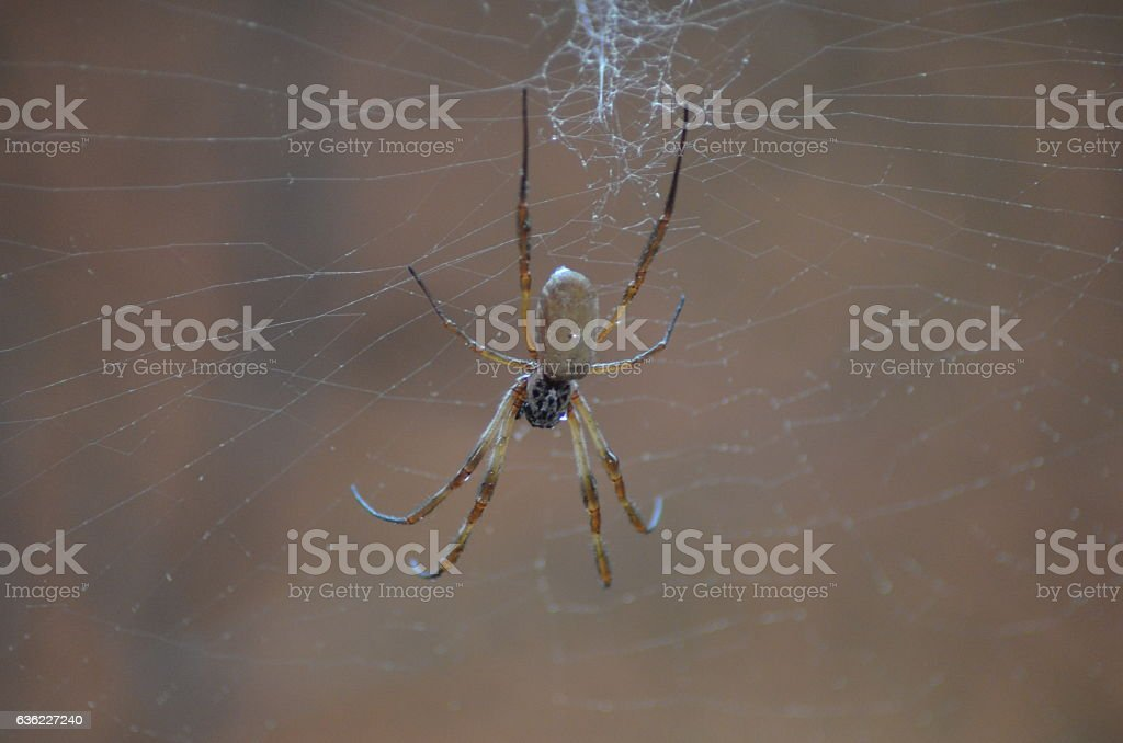 Spider in the net stock photo