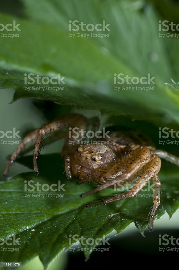 Spider in the plant royalty-free stock photo