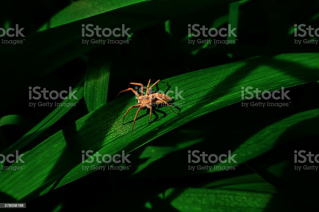 spider in the shadows royalty-free stock photo