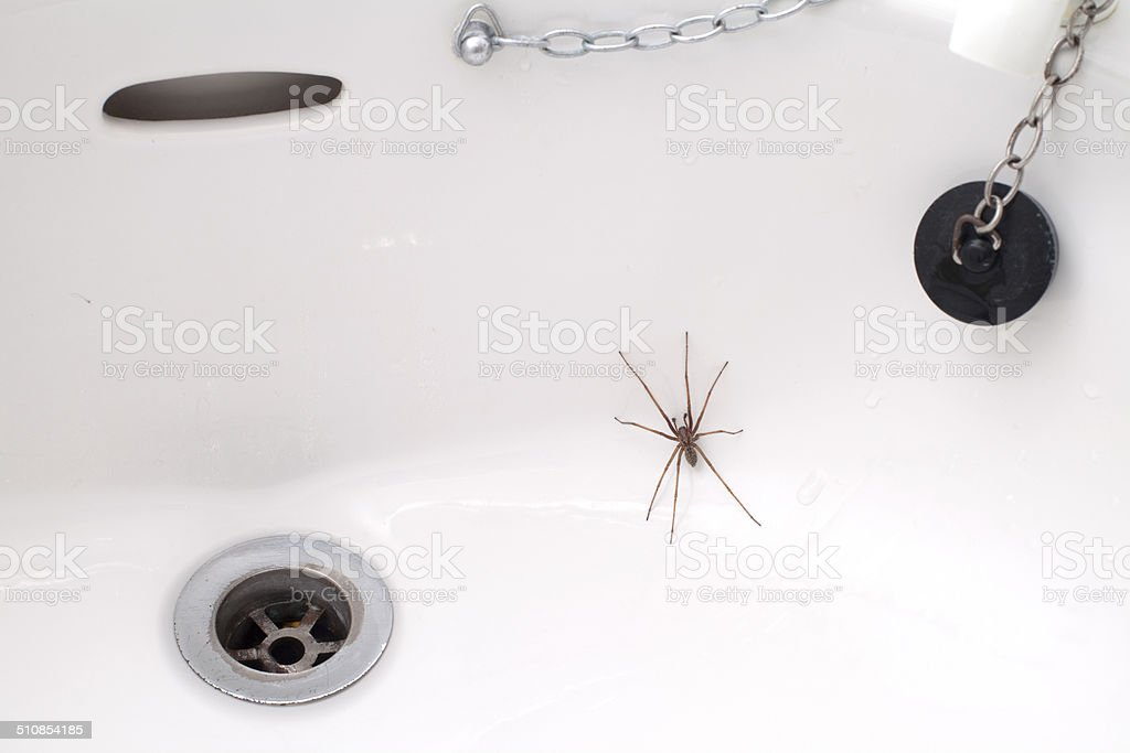 Spider in the Sink stock photo