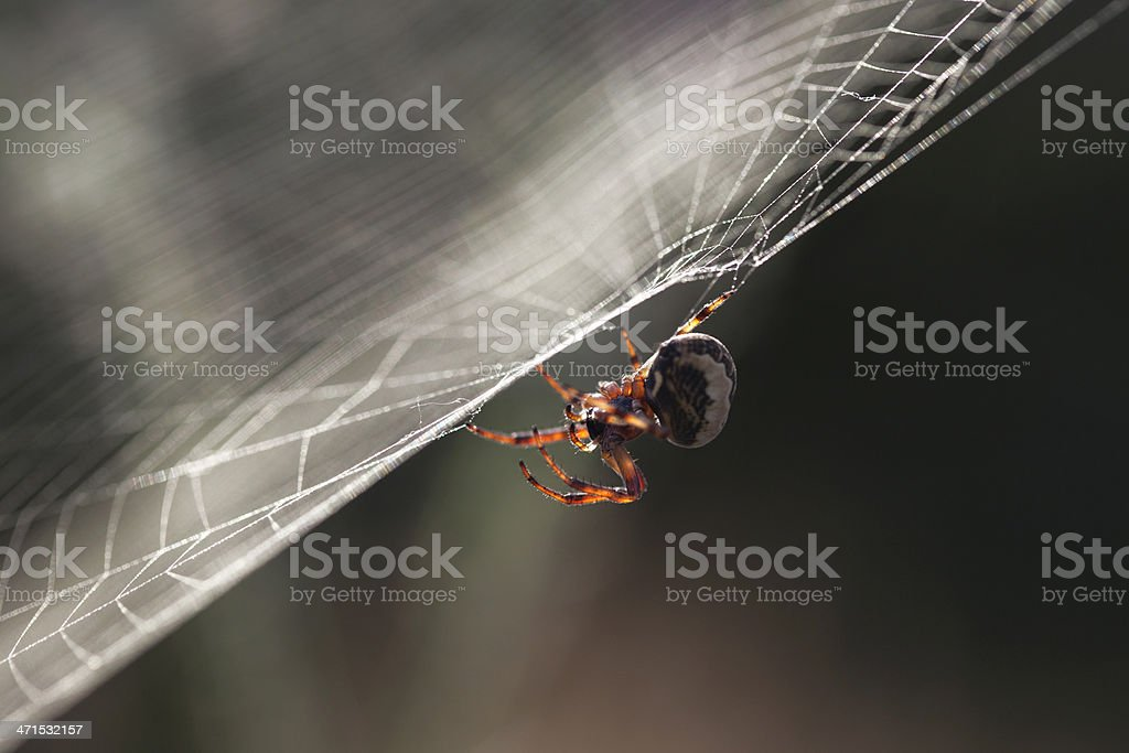 Spider In The Web stock photo