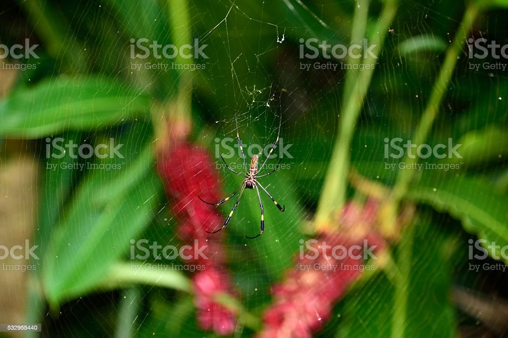 Spider in the wild stock photo