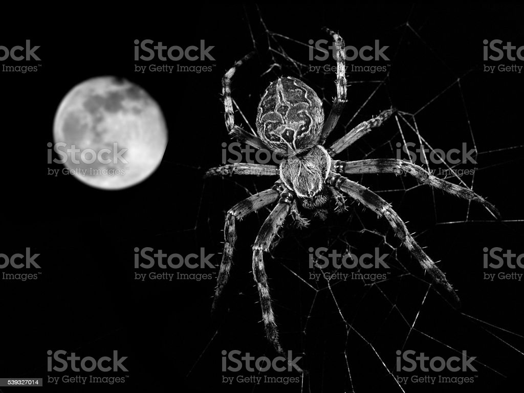 Spider in web and ull moon isolated on black stock photo