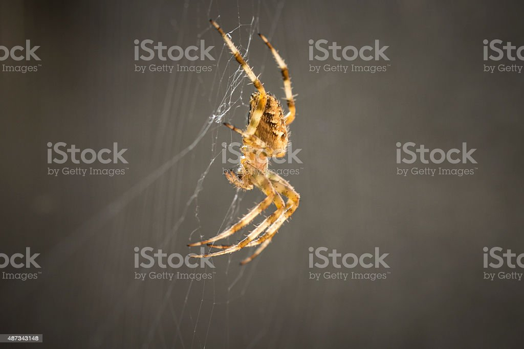 Spider in web stock photo