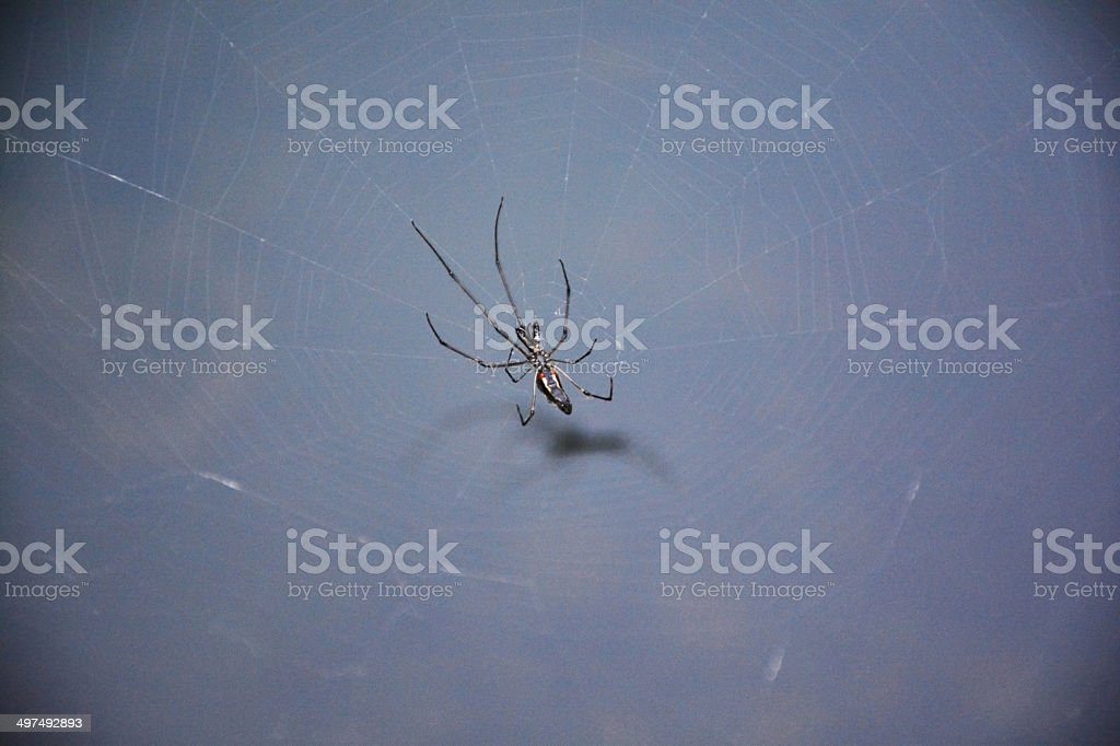 Spider in web. stock photo