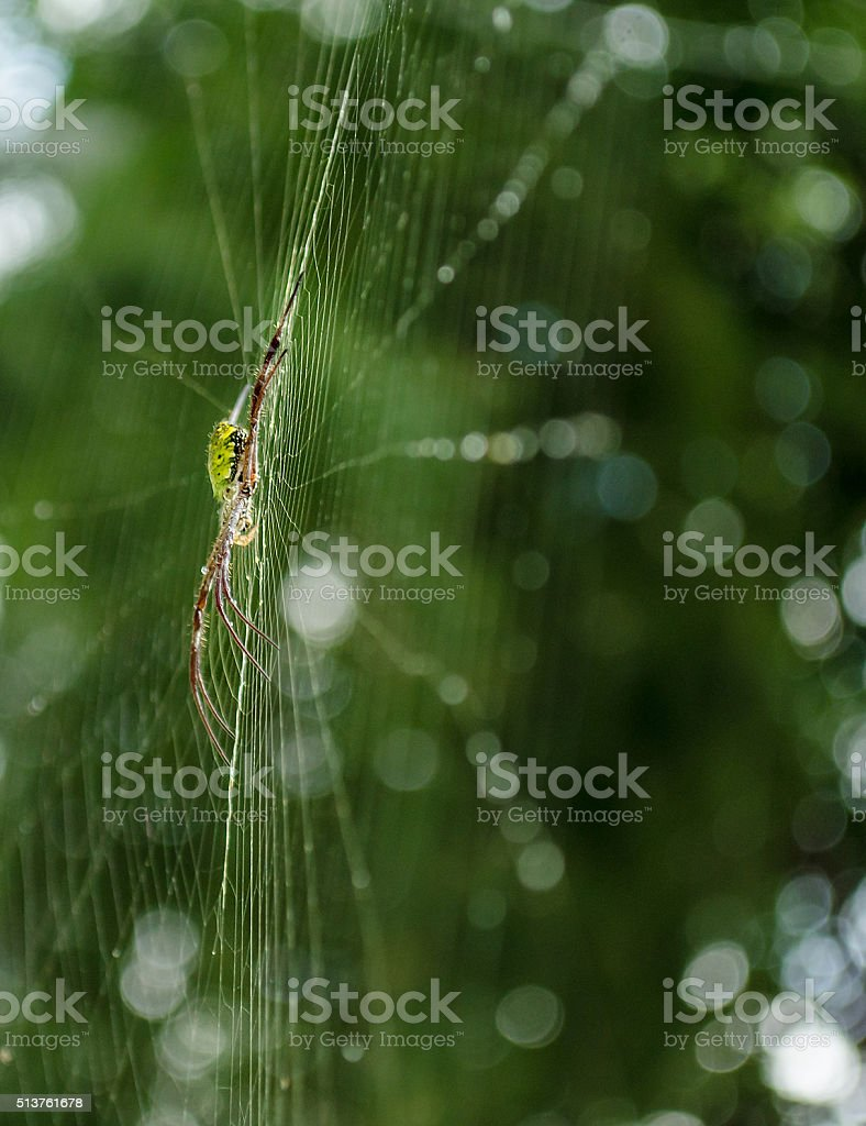 spider in web with blurry background stock photo