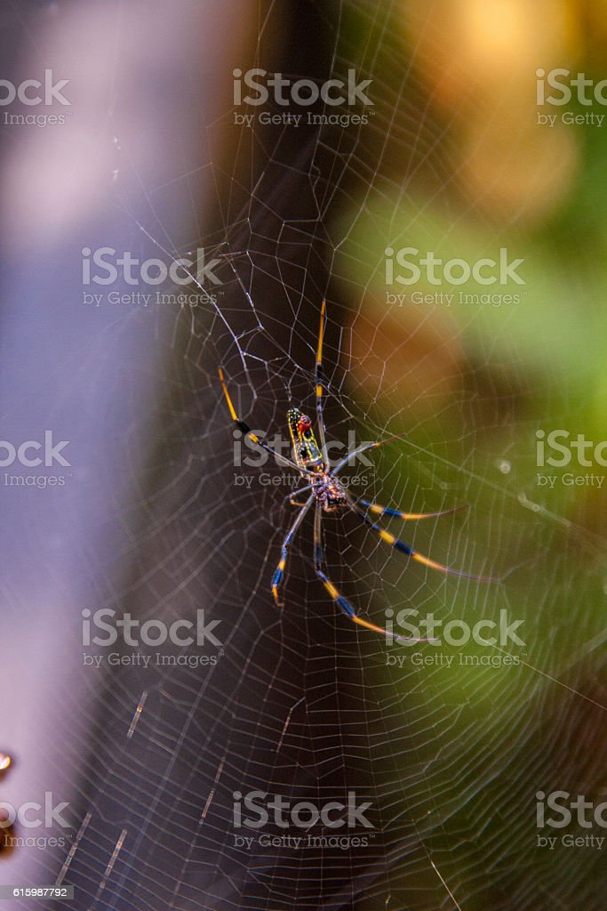 Spider in web with plants stock photo