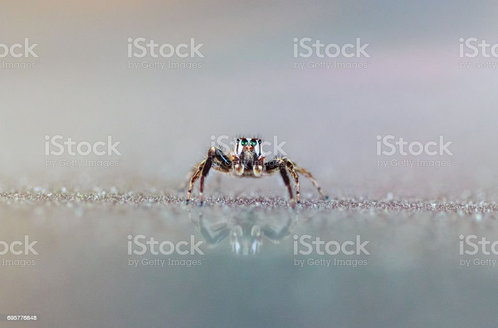 Spider insect animal bug
