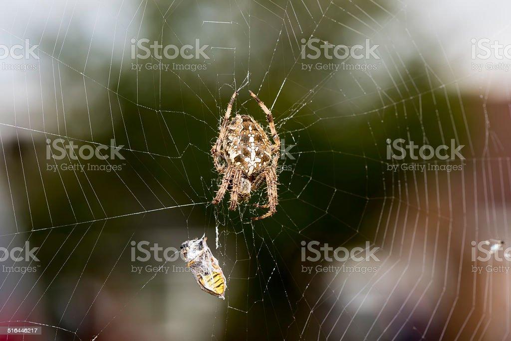 Spider killing prey stock photo