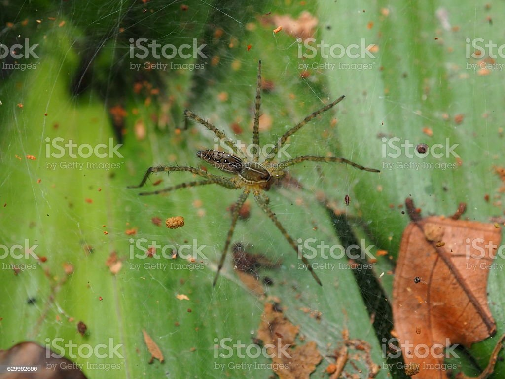 Spider net on leaf. stock photo