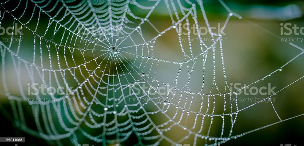 Spider net with water drops stock photo