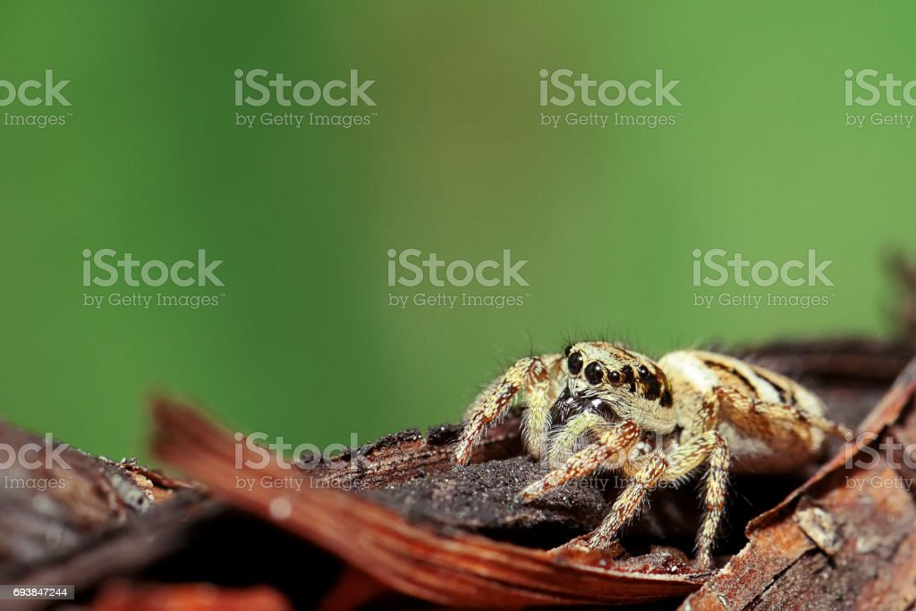 Spider on a branch. stock photo