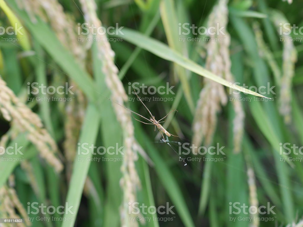 spider on a leaf stock photo