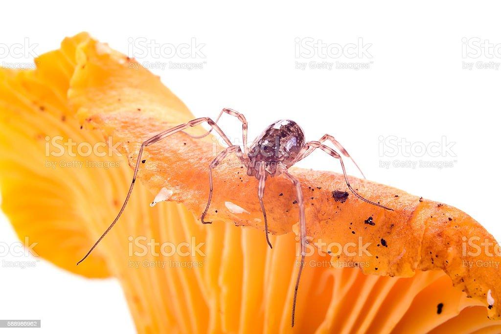 Spider on a mushroom stock photo