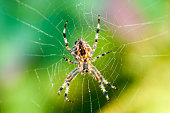 Spider on a spider web with a colorful background