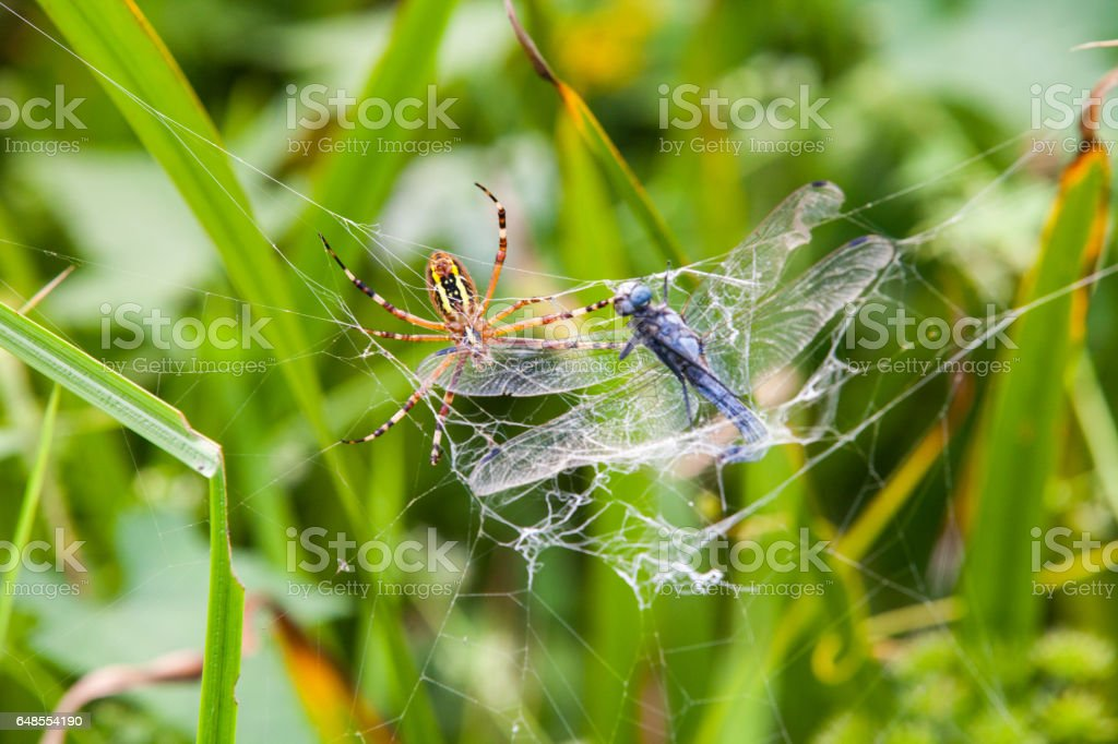 Spider on a spider web with a green background stock photo