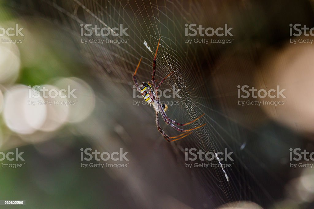 Spider on a spider web with a natural background stock photo