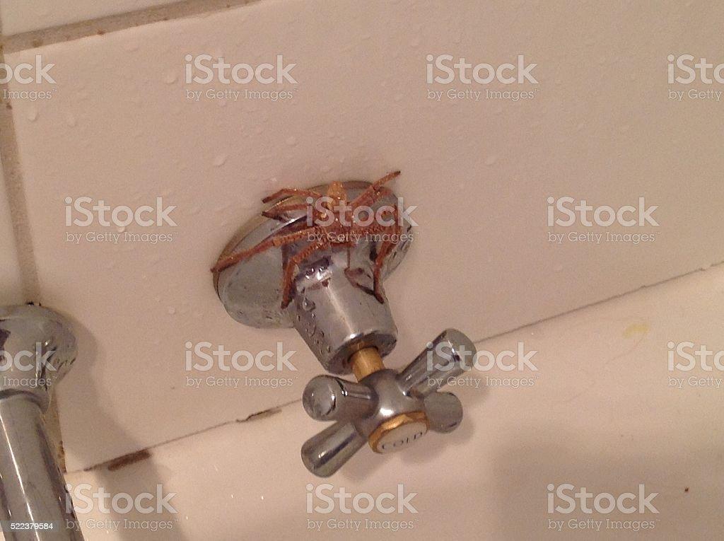 Spider on bath tap stock photo