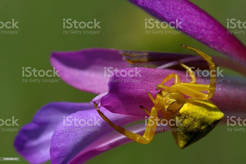 Spider on flower stock photo