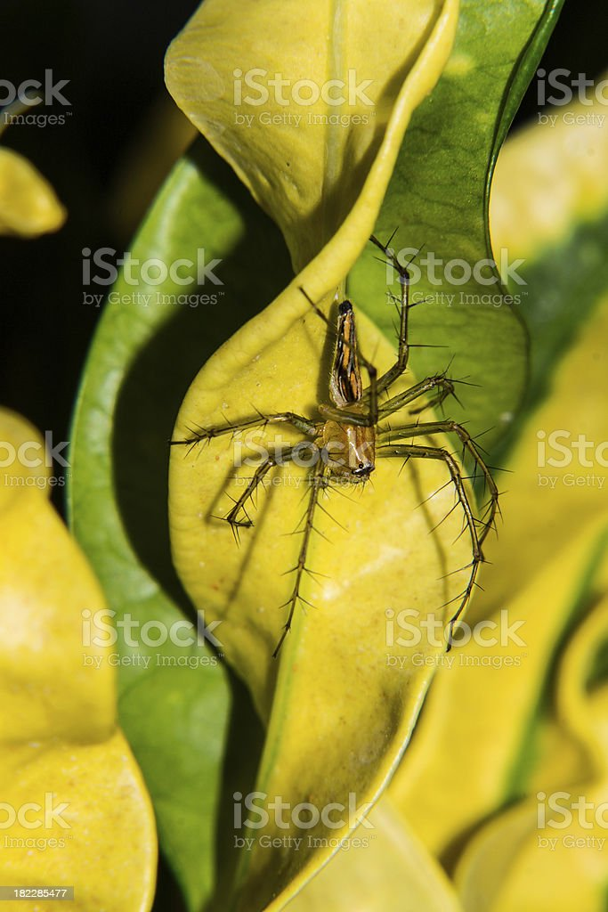 spider on green leaf royalty-free stock photo