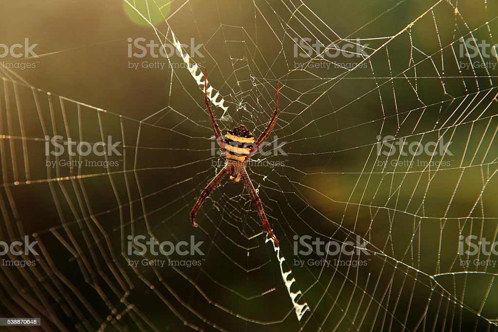 Spider on its web stock photo