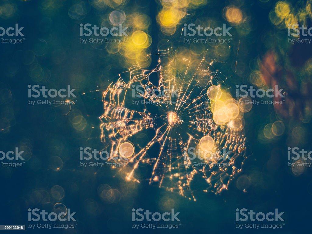 spider on net in sunshine stock photo