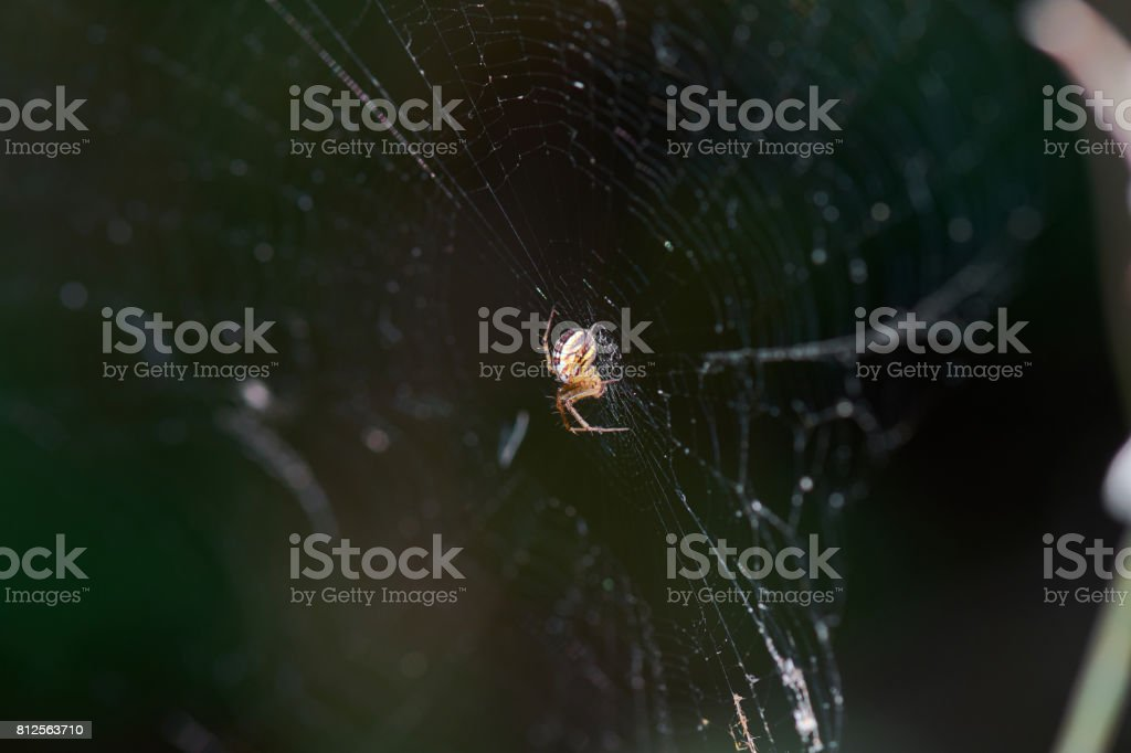Spider On Net stock photo