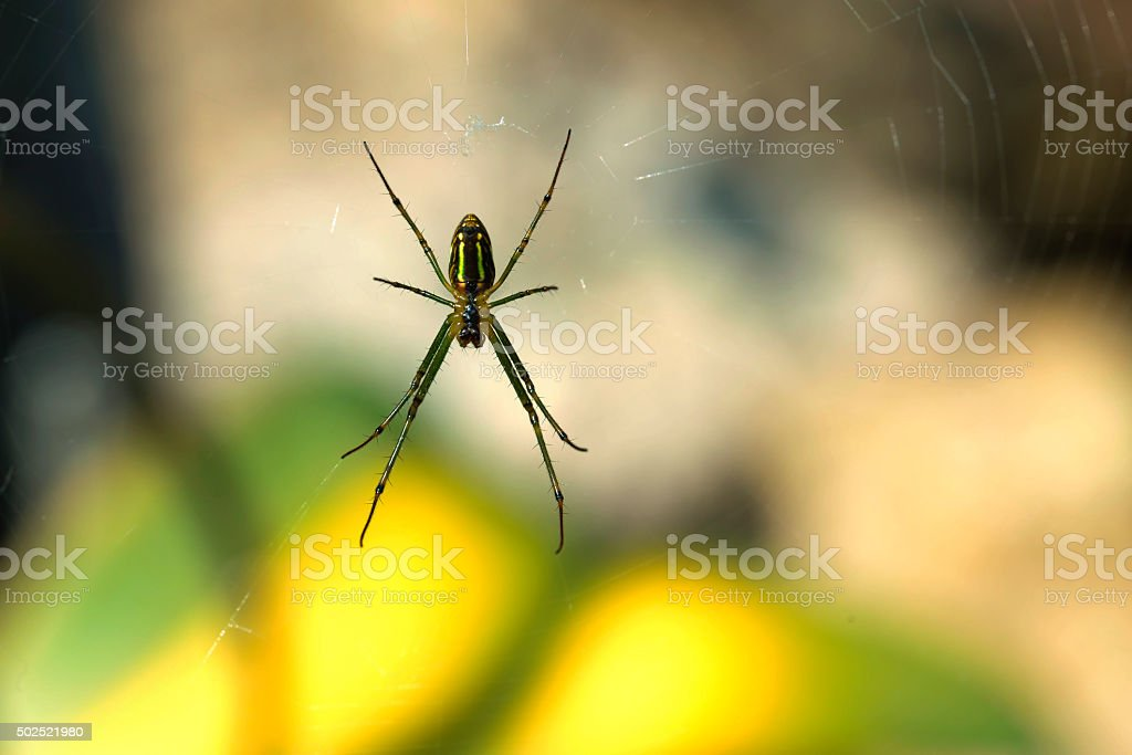 Spider on spider web in nature royalty-free stock photo