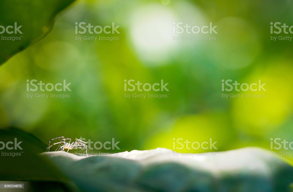 spider on the leaf stock photo